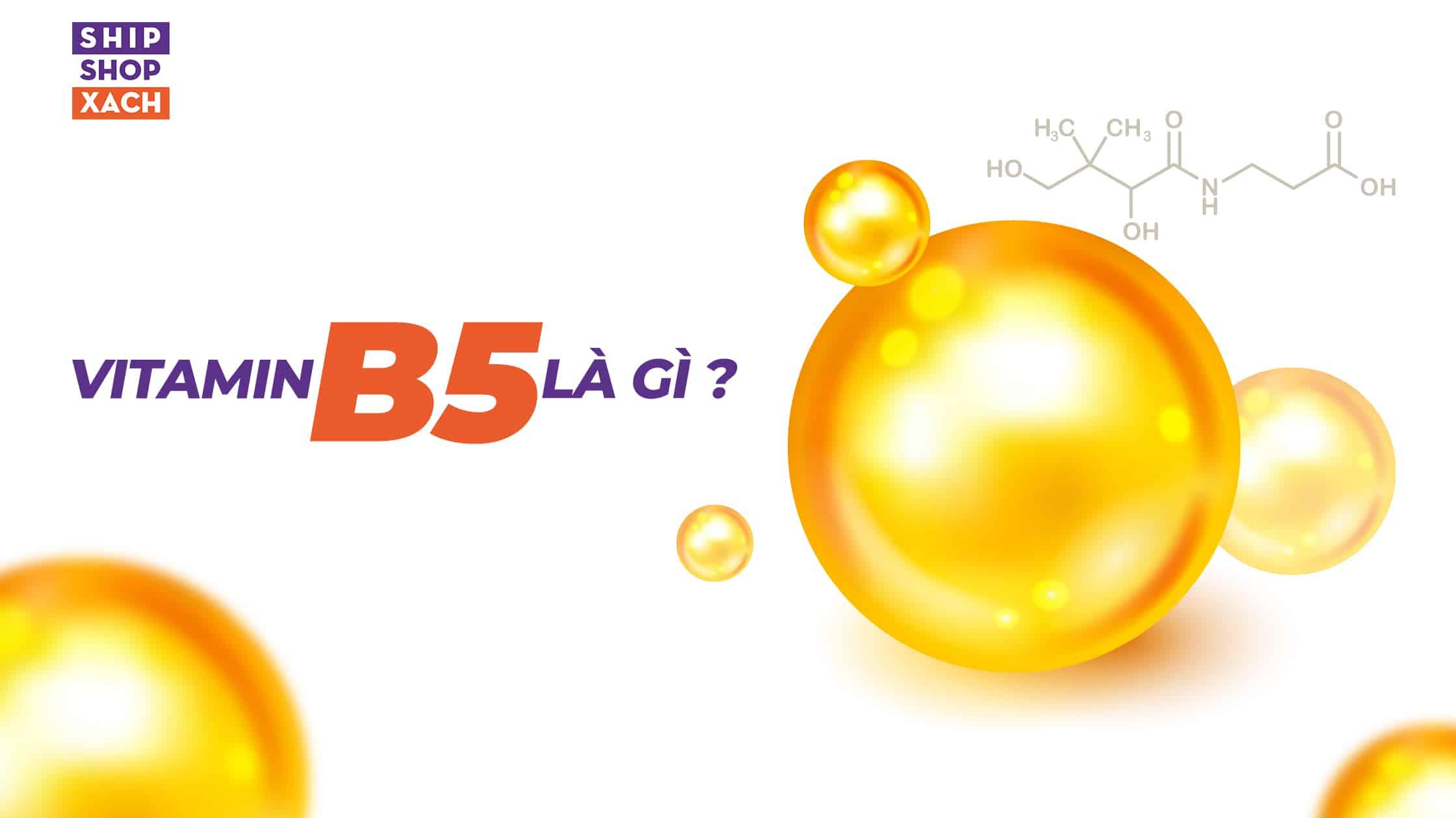 b5 la gi banner 01